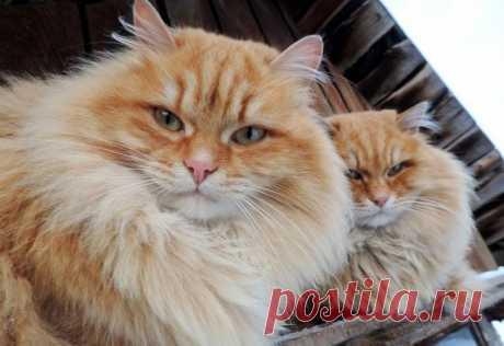Суровые сибирские котики — Путешествия