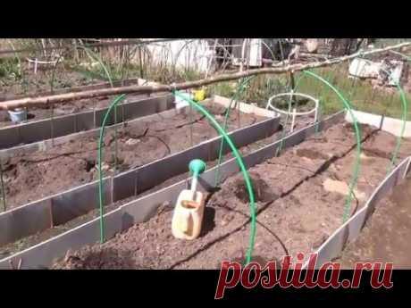 Подготовка грядки для посадки арбузов и дынь. - YouTube
