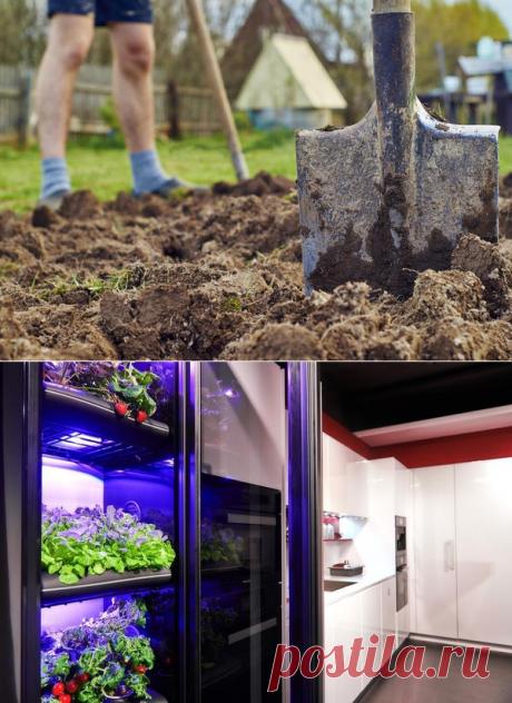 Домашняя ферма Фибоначчи: что это и как работает