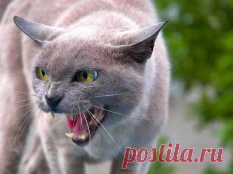 Кошка в доме: какие опасности несет в себе соседство с домашним любимцем Рубрика Досуг - Животные: Кошка в доме: какие опасности несет в себе соседство с домашним любимцем. Читай последние новости событий на Joinfo.ua