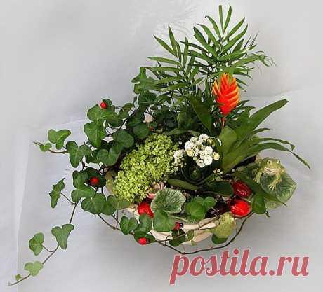 Советы любительницам комнатных растений / Все для женщины