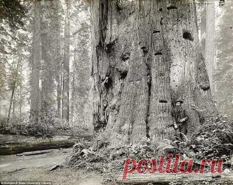 Когда деревья были большими. | Блог water | КОНТ