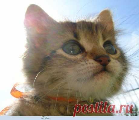82 поразительных факта о кошках