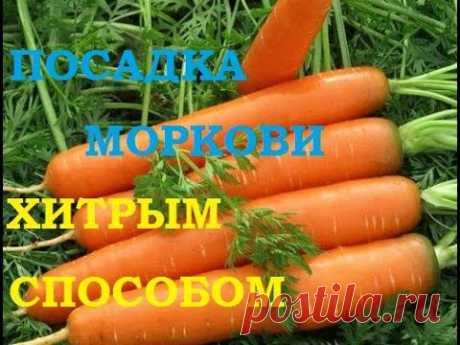Посадка моркови хитрым способом! Ждем всходы через несколько дней!