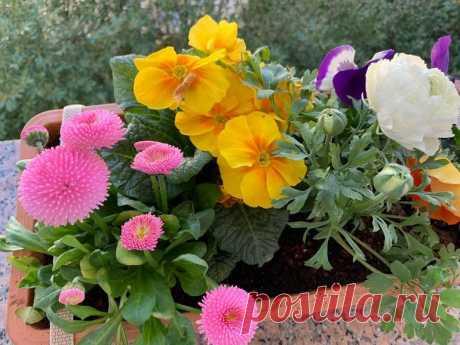 Как я выращиваю цветы из семян для балкона и террасы. Практичные советы с иллюстрацией
