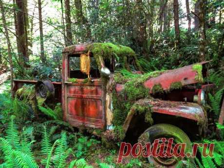10 заброшенных джипов, найденных в джунглях | Pentad