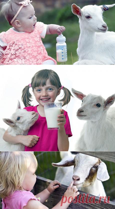 Козье молоко для грудничка – с какого возраста давать для пользы