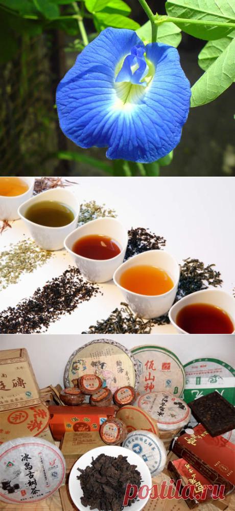 Необычные сорта чая, которые стоит попробовать | Рецепты полезных и вкусных блюд в домашних условиях