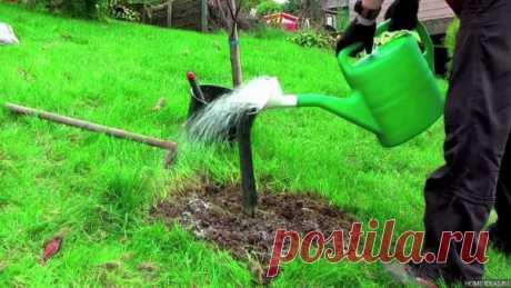 Чем подкормить деревья и кустарники весной