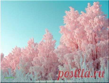 Только Зимой может быть вот такое Потрясающее Розовое Утро