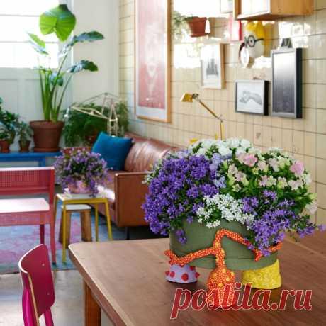 Кампанула (Жених и невеста): фото цветка, правила ухода в домашних условиях