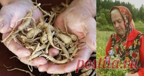 Монастырская травница: «Не хочешь болеть — выкопай 3 корня!» Елена Федоровна Зайцева — известная травница, занимающаяся фитотерапией еще с 8 лет. Не найдется такого лекарственного растения в наших широтах, о свойствах которого она бы не знала: всего более 1100
