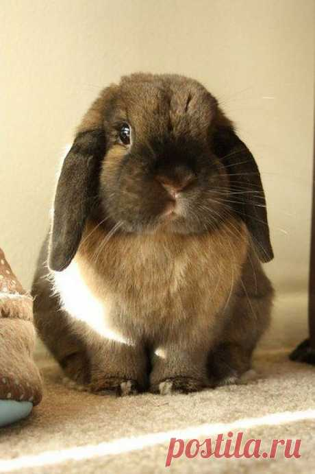 Adorable Lop-Eared Bunny | Cutest Paw