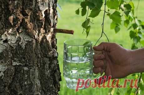 Старинные рецепты напитков из березового сока | Русская деревенская кухня | Яндекс Дзен