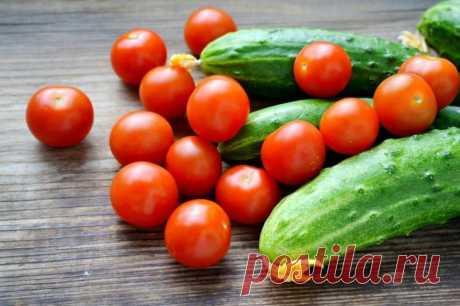 Дрожжи для подкормки помидоров и огурцов: рецепт Огородникам всё тяжелее получить на своих участках хороший урожай. Различные заболевания, неблагоприятные погодные условия, обеднённая почва, отсутствие севооборота приводит к тому, что дачникам прихо...