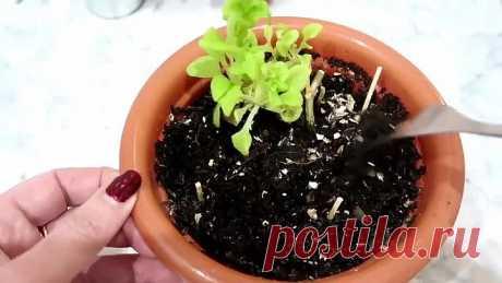 Как же правильно подкармливать цветы! Особенно в зимнее-весенний период?