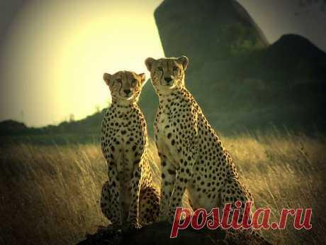 Танзания и её достопримечательности / Туристический спутник