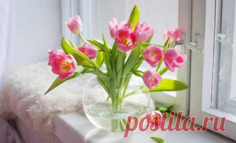 Как дольше сохранить срезанные тюльпаны в домашних условиях | В цветнике (Огород.ru)