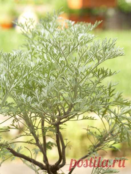 3 растения, которые отпугивают клещей и блох с Вашего участка | Школа Цветоводства | Яндекс Дзен