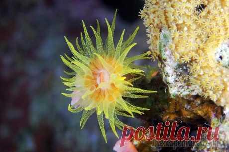 Актиния - цветок моря