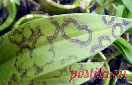 Болезни орхидей с описанием и как с ними бороться: фото и видео, что нужно делать для лечения комнатных цветов в домашних условиях