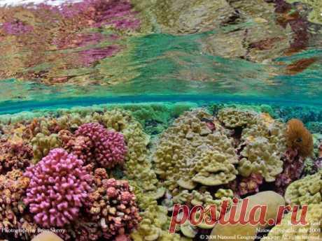 Пестрый ковер из кораллов обрамляет дно вокруг рифа Кингмен, удивляя яркостью красок и замысловатостью форм