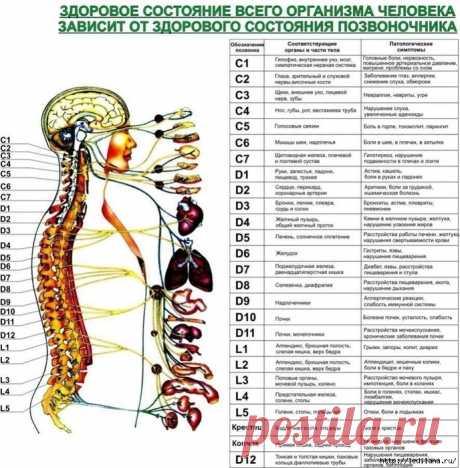 ¡La columna vertebral sana es simplemente!