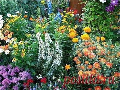 10 многолетников, цветущих все лето