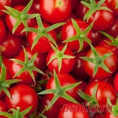 Хотите помидор - купите...трихопол!   Все знают, каким бичом для томатных грядок является фитофтора.   Как утверждают многие овощеводы-любители, обработка аптечным трихополом помидоров несколько раз за сезон полностью избавляет ваши плантации от фитофтороза и освобождает вас от многочисленных обработок культуры ядохимикатами.   Раствором 20 таблеток на 10 л воды проводите опрыскивания примерно раз в 10 дней. Если же прошел дождь, то на следующий день обязательно опрыскайте...