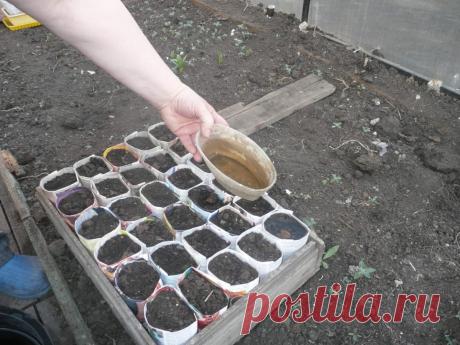 Подготавливаем землю для рассады правильно | Садовник | Сад | Огород | Урожай | Яндекс Дзен
