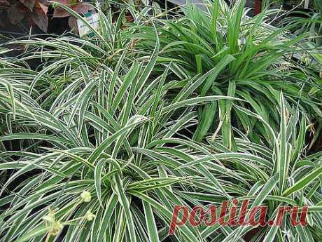 Самые полезные комнатные растения | Fresher - Лучшее из Рунета за день