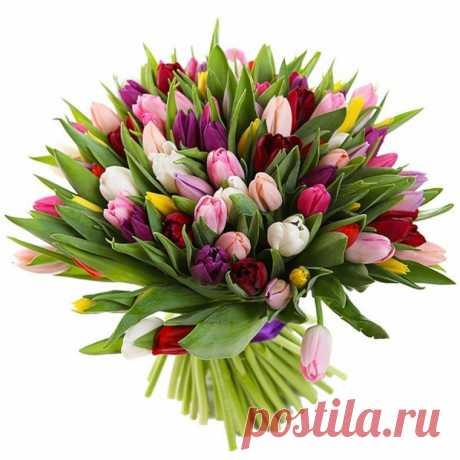 Продлеваем жизнь тюльпанов в вазе