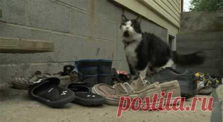 Жительница Пенсильвании создала в Фейсбуке сообщество для соседей, чтобы возвращать украденную её котом обувь — Животные на TJ