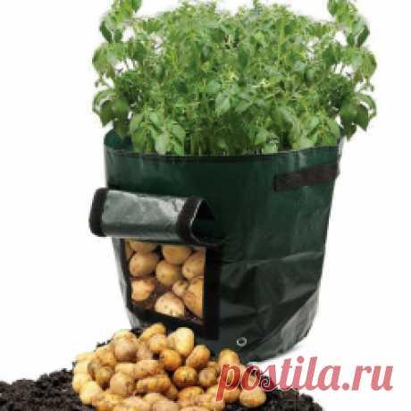 Мешки для выращивания картошки Прочитал статью о том, как в мешке выращивают картошку и урожай 20 кг с мешка. Не поверил. Решил проверить. Заказал на Али мешки. И начал сажать… Сказка о картошке, которая ...