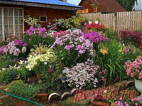 Многолетние цветы долгого цветения » Все для дачи