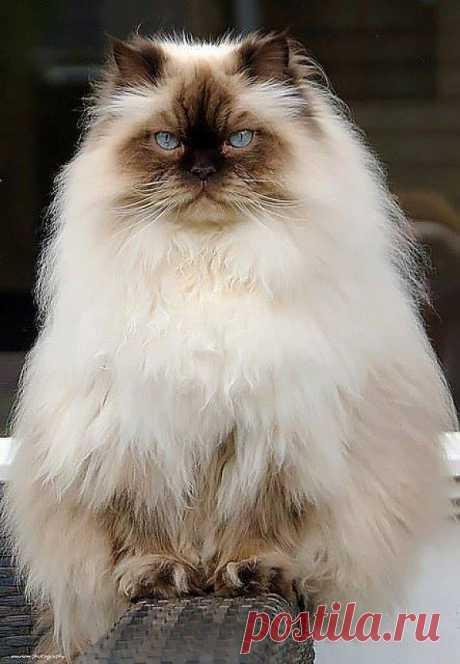 Very Pretty Kitty! | Cutest Paw