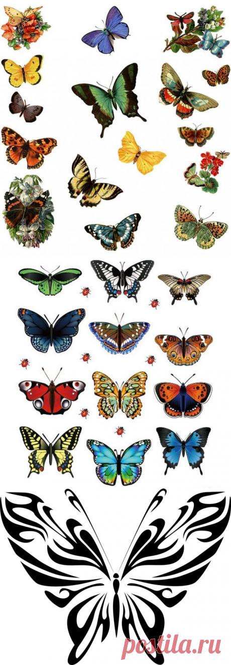 Бабочки картинки для вырезания цветные. Картинки бабочки красивые нарисованные для распечатки (35 фото)