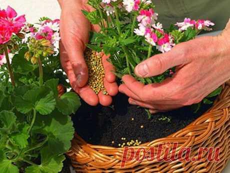 Las flores y las plantas, el cuidado de ellos | las Anotaciones en la rúbrica las flores y las plantas, el cuidado de ellos | el Diario ipola
