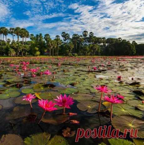Озеро лотосов в Ангкор Вате, Камбоджа ...