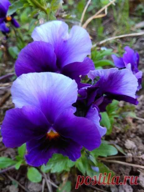 Весна - это волшебство! 🔆 ♥
