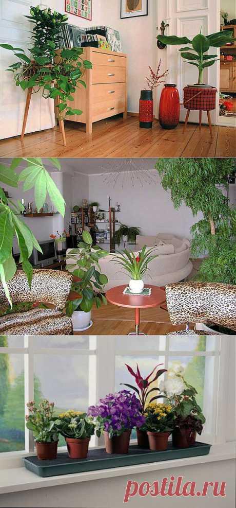 Комнатные растения по фэн-шуй: Значения больше 50 видов - Комнатные растения - уход за комнатными растениями - Дом - IVONA - bigmir)net - IVONA - bigmir)net