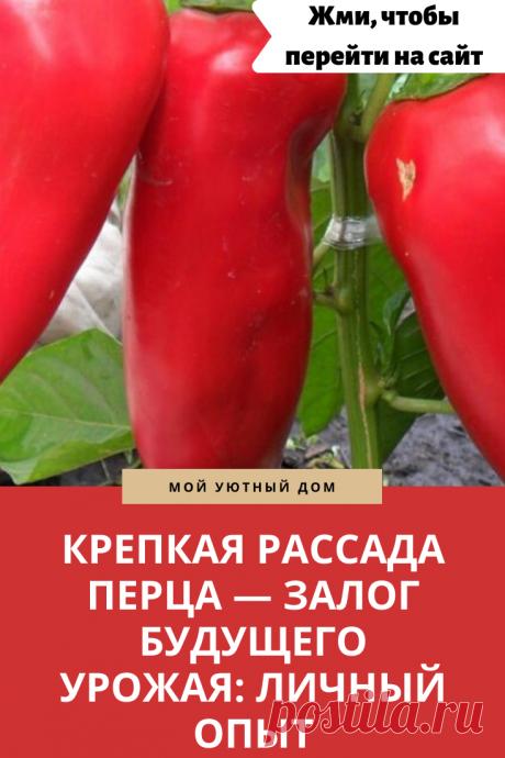 Как правильно посадить перец. Полезные советы