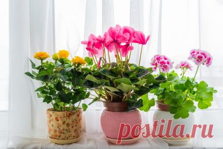 Какие цветы обязательно должны быть в доме: советы фэн-шуй | Магия жизни | Яндекс Дзен