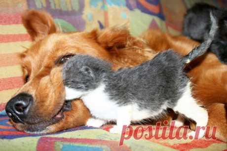 20 примеров очаровательной дружбы котов и собак