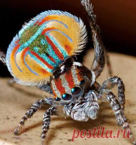 Разноцветный паук Chronik-Fotos | Facebook