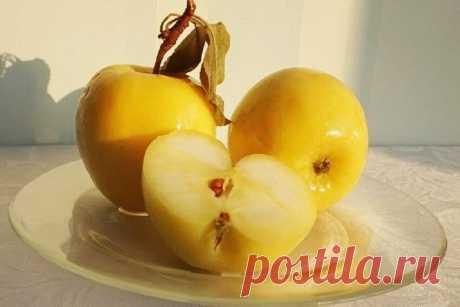 Моченые яблоки Донского монастыря (секретный рецепт) | DiDinfo | Яндекс Дзен