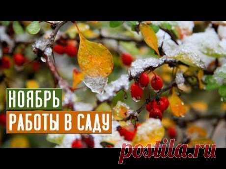 Основные работы в саду в ноябре Прощаемся с дачей до весны! / Садовый гид