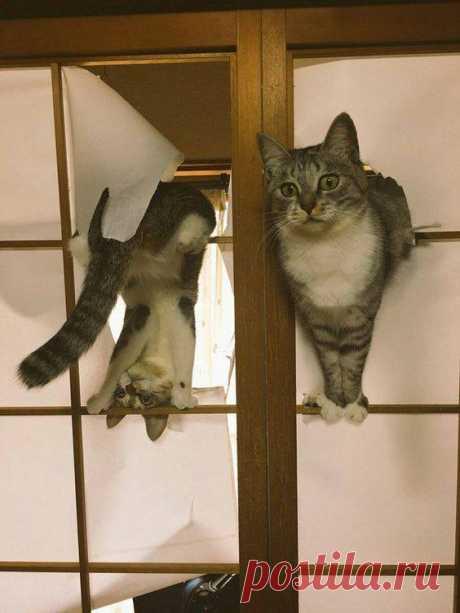 """Решение установить японские двери """"Сёдзи"""", было ошибкой.."""