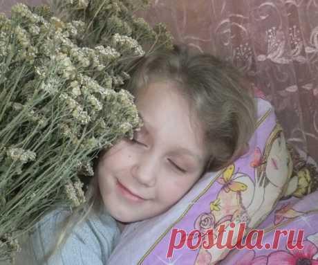 Травяные подушки помогут человеку сохранить здоровье нервной системы и избавиться от бессонницы   Будем здоровы   Яндекс Дзен
