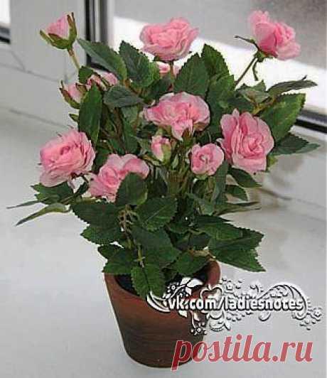 Как правильно пересадить миниатюрную розу после покупки.